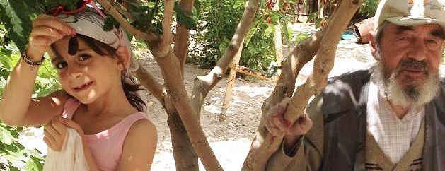 turkishfigtree