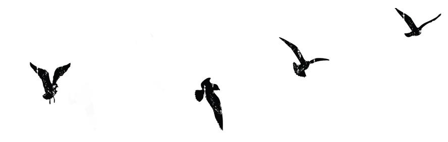 birds_reverse.jpg